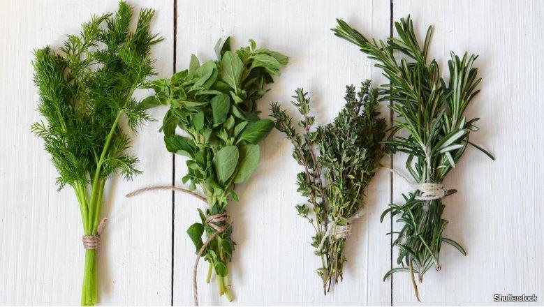 Jak udržet bylinky čerstvé