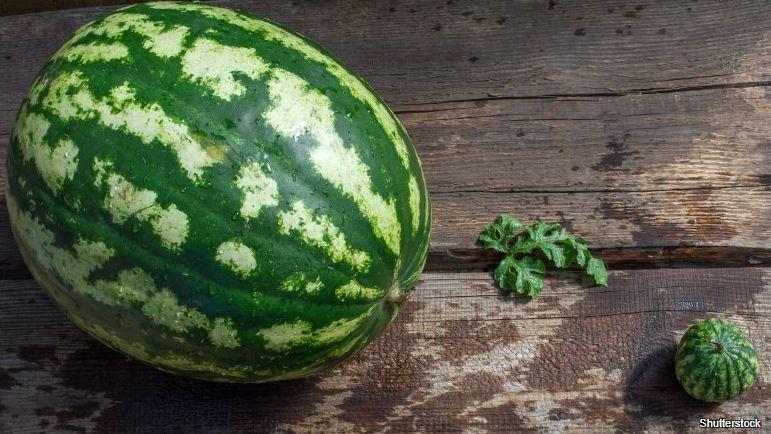 Nezralý meloun nemá tolik živin